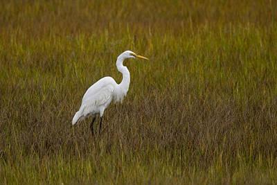Soundside Park Topsail Island Egret Poster by Betsy Knapp