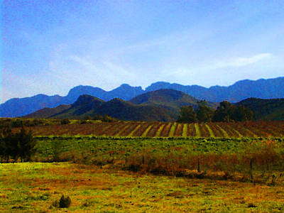 South African Winelands 2 Poster by Lenore Senior  and Constance Widen