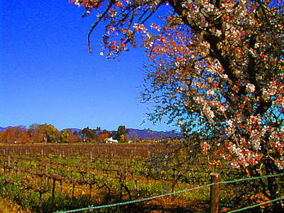 South African Winelands 3 Poster by Lenore Senior and Constance Widen