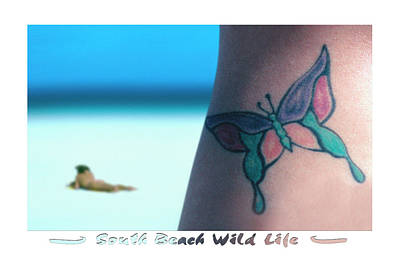 South Beach Wild Life Poster by Mike McGlothlen