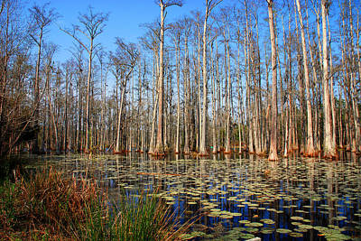 South Carolina Swamps Poster