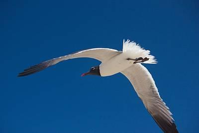 South Padre Seagull Poster by Bonita Hensley