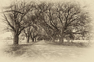 Southern Journey Sepia Poster