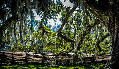 Southern Live Oak Tree And Wooden Fence Poster by Optical Playground By MP Ray