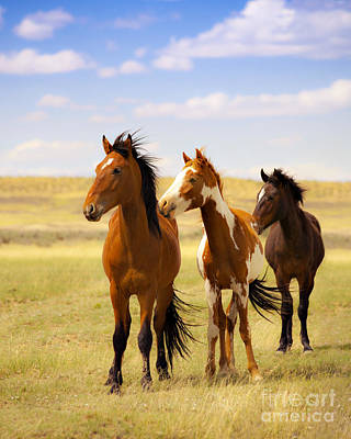 Southwest Wild Horses On Navajo Indian Reservation Poster by Jerry Cowart