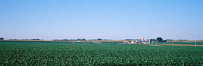 Soybean Field Ogle Co Il Usa Poster by Panoramic Images
