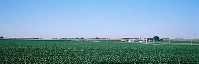 Soybean Field Ogle Co Il Usa Poster