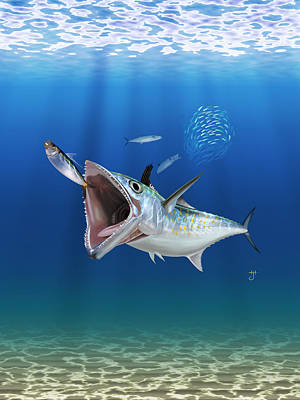 Spanish Mackerel Poster