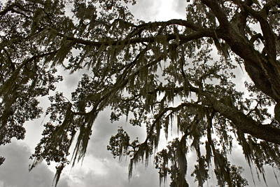 Poster featuring the photograph Spanish Moss by Alice Mainville
