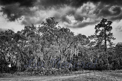 Spanish Moss And Clouds Study Poster by Silvio Ligutti