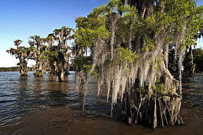 Poster featuring the photograph Spanish Moss by Andy Crawford