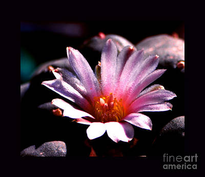 Sparkling Peyote Flower Poster by Susanne Still