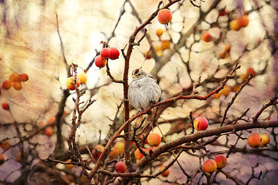 Sparrow In A Crab Apple Tree Poster by Peggy Collins
