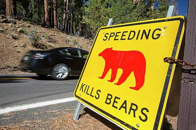 Speed Kills Bears Sign In Yosemite Poster by Ashley Cooper