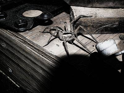 Poster featuring the digital art Spider B And W by Robert Rhoads