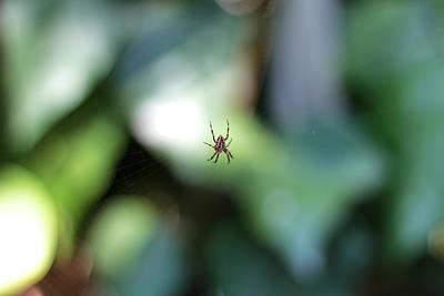 Spider Bokeh Poster