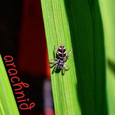 Spider On Green Leaf Poster