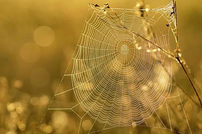 Spider Web, Indiantown, Florida Poster