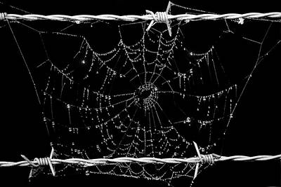 Spider Web On Barbed Wire Poster