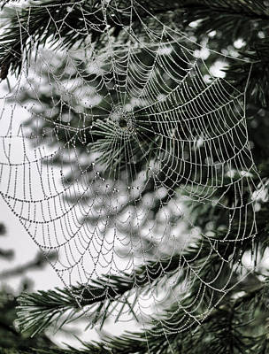 Spider Web With Dew Drops Poster