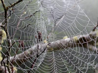 Spider Webs Poster