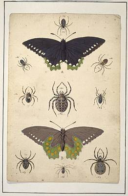 Spiders And Butterflies, Artwork Poster by Science Photo Library
