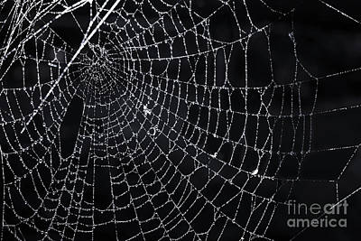 Spiderweb With Dew Poster