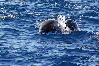 Spinner Dolphins Poster by Bob Hislop
