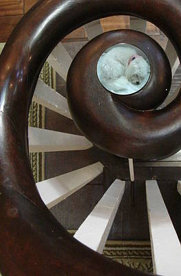 Spiral Railing And Puppy Poster by Mary Beth Landis