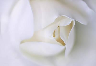 Spirit White Rose Flower Macro Poster by Jennie Marie Schell
