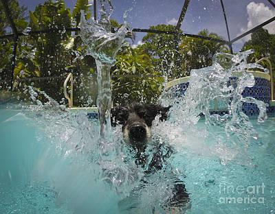 Splash Down Poster