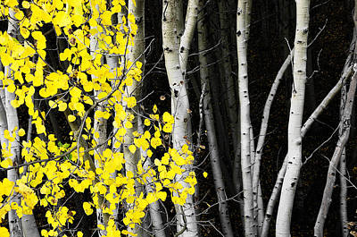 Splash Of Gold Poster by The Forests Edge Photography - Diane Sandoval