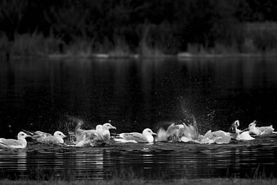Poster featuring the photograph Splashing Seagulls by Yulia Kazansky