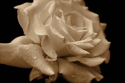 Splendor Sepia Rose Flower Poster by Jennie Marie Schell