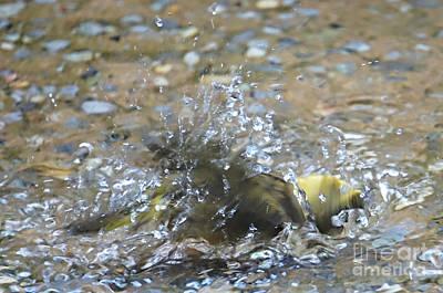 Splish Splash Bird Bath Poster by Lilliana Mendez
