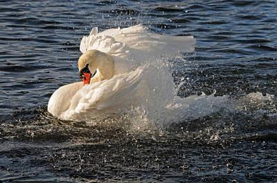 Splish Splash Taking A Bath Poster by Jlt Photography