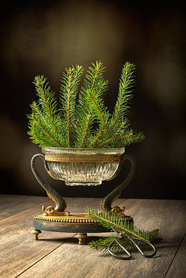 Sprigs Of Pine Tree Poster by Amanda Elwell