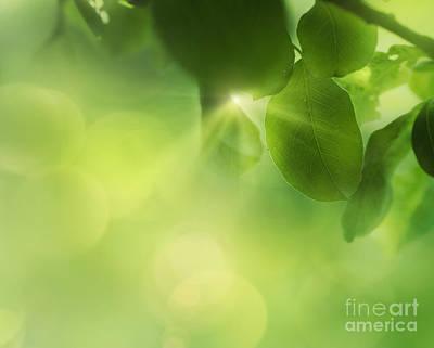 Spring Apple Leaf Background Poster