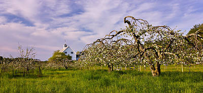 Spring Apple Orchard Poster