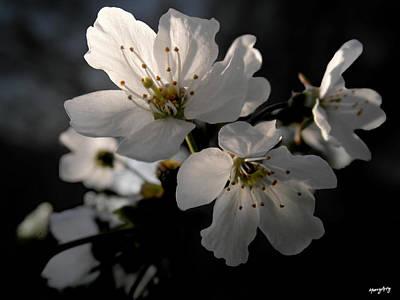 Spring Emerging Poster
