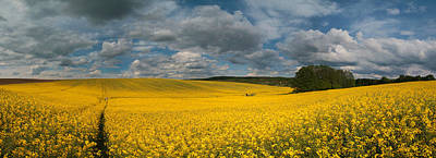 Spring At Oilseed Rape Field Poster