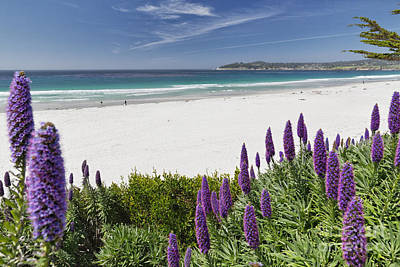 Spring Beach Vista Of Carmel Beach Poster by George Oze