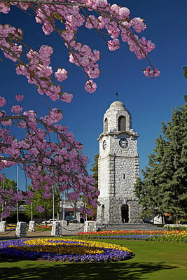 Spring Blossom And Memorial Clock Poster by David Wall
