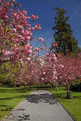 Spring Blossom, Ashburton Domain Poster by David Wall