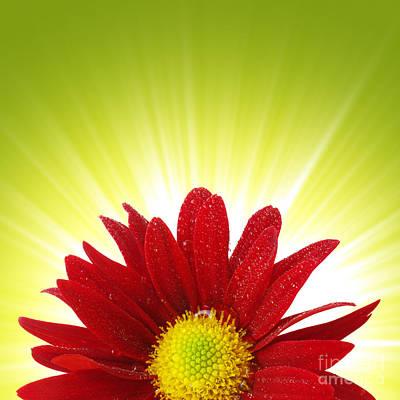 Spring Blossom Poster by Carlos Caetano