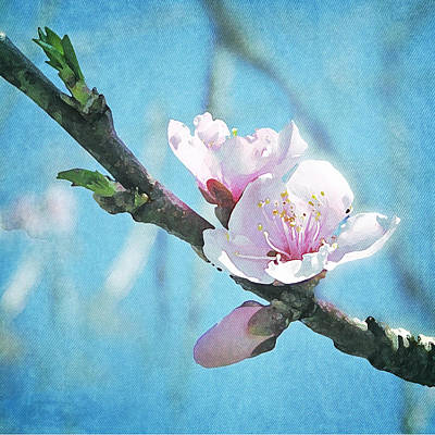 Poster featuring the photograph Spring Blossom by Jocelyn Friis