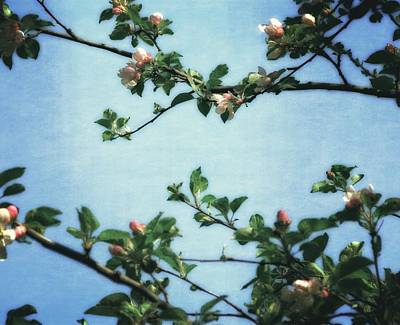 Spring Blossoms 2.0 Poster by Michelle Calkins
