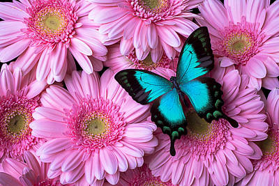 Spring Blue Butterfly Poster by Garry Gay