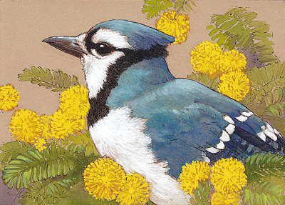 Blue Jay In The Mimosa Tree Poster by Tracie Thompson