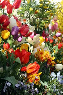 Poster featuring the photograph Spring Bulb Bonanza by Mary Lou Chmura